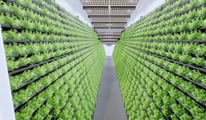 MABEWO AG - Indoor-Farming