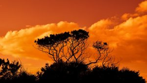 Bäume Afrika / Pixabay
